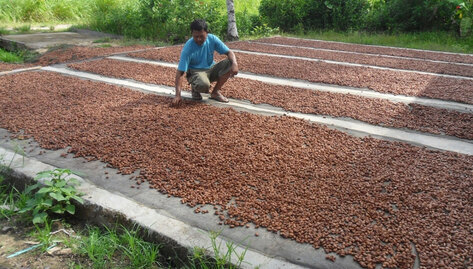 ADM Cocoa & Swisscontact Distribute Premiums and Loyalty Bonuses to Individual Cocoa Farmer