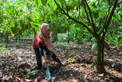 JB Cocoa Joins as General Assembly Member, and PT. Pupuk Kalimantan Timur as Supervisory Board Member of CSP
