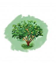 Trees Population